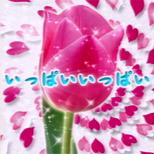 06_03_ippai_ippai.png